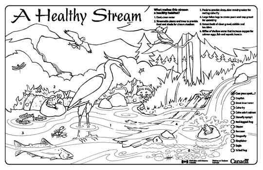Streamkeepers Placemats and Colouring Sheets